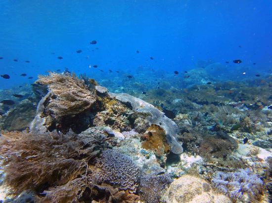 Alor Divers Eco Resort: ダイビングスポット