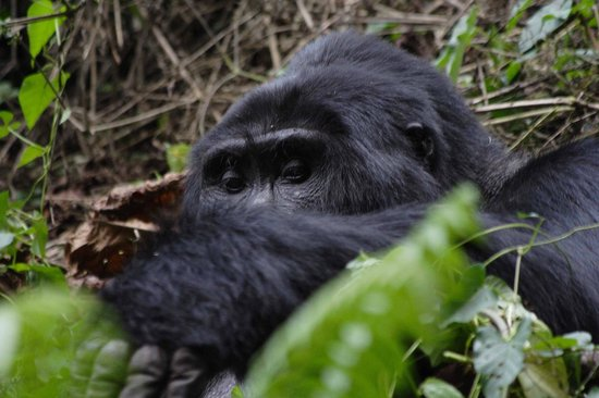 Mgahinga Gorilla National Park: incredibile!