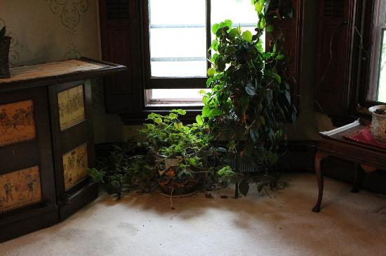 Firmstone Manor: the plants inside look better than the ones outside!