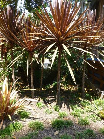 Hyatt Regency Mission Bay: Garden