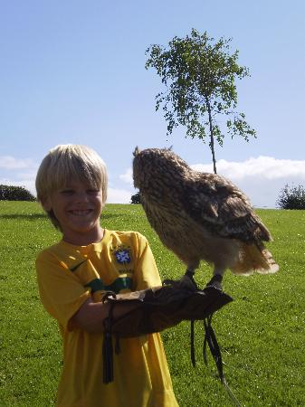 Whitehill Country Park: Falconry Display