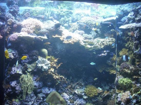 Sea Turtle Picture Of Downtown Aquarium Denver