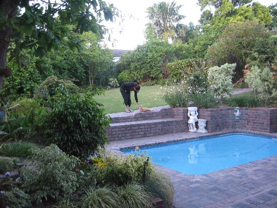 Paradiso Guesthouse & Self Catering Cottage: Garden, Pool and Friendly Cat