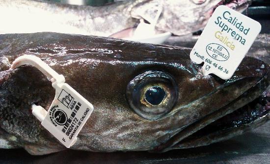 El Bocoy: Merluza de Pincho de Puerto de Celeiro