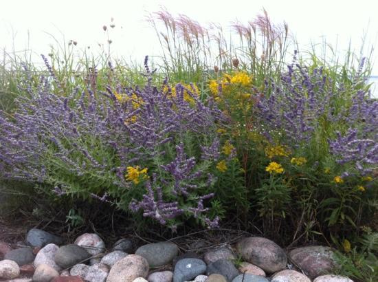 Bridge View Park: the beauty of wild flowers