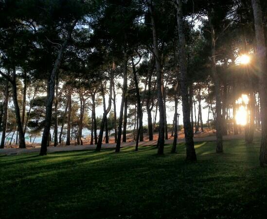 Cikat Forest Park: pineta hotel vespera
