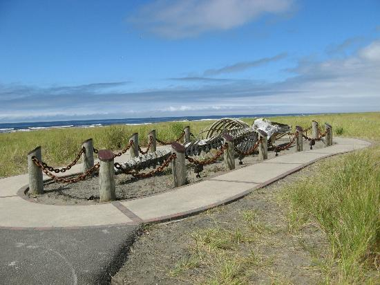 Long Beach, WA: Grey Whale bones along the Discovery Trail