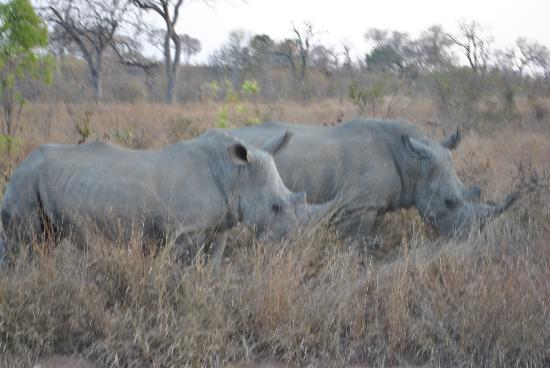 Tydon Safari Camp: Second of the big five-Rhino eating in the grass;)