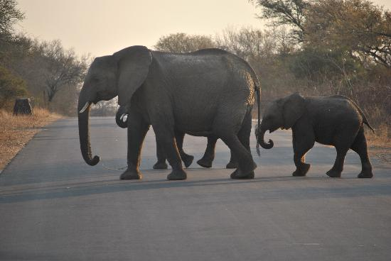 Tydon Safari Camp: Third of the big 5-Elephant crossing