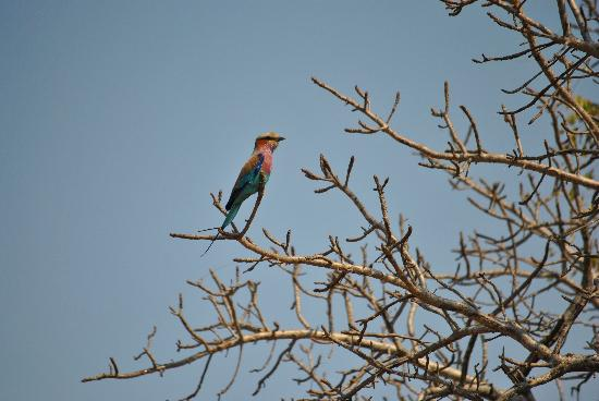 Tydon Safari Camp: Plenty of birds around camp too:)