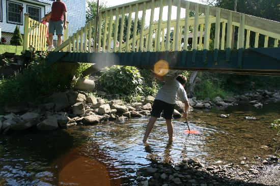 The Hayden Creek Inn: Catching crayfish in the creek