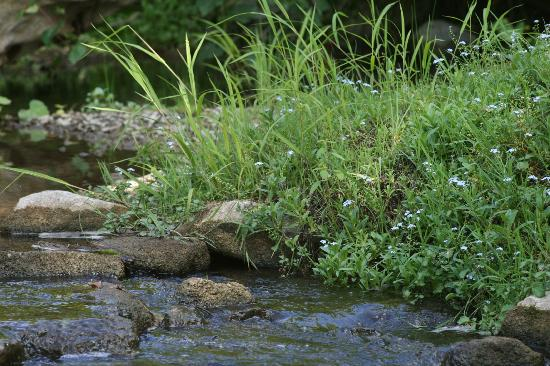 هايدن كريك إن: Backyard creek 