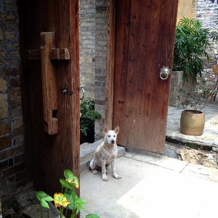 Secret Garden Boutique Hotel: A friendly neighbour visits everyay
