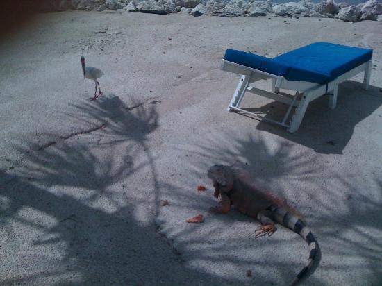 Ibis Bay Beach Resort: Rueckseite vom Hotelzimmer