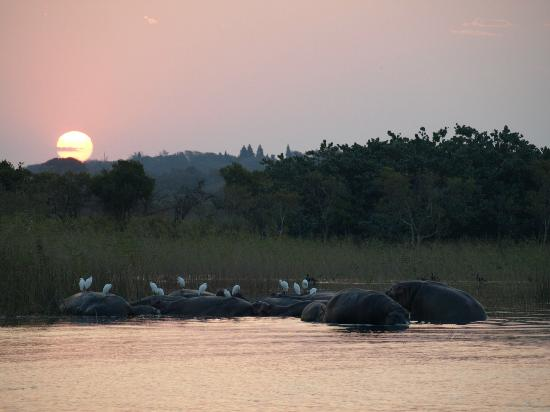 Heritage Day Tours & Safaris: Hippo