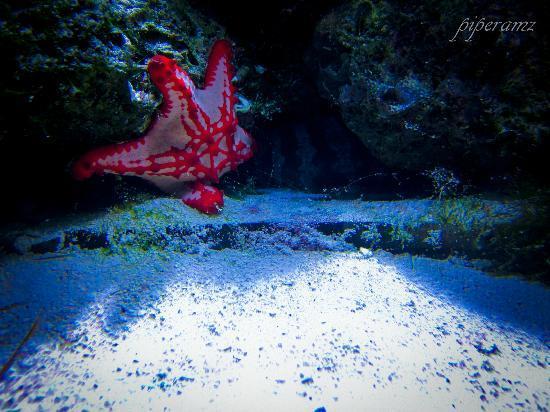 Parque Explora: Estrella de Mar (Morena en el fondo)