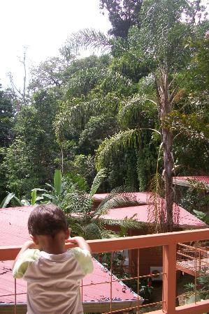 Mar y Selva Ecolodge: View to the forest