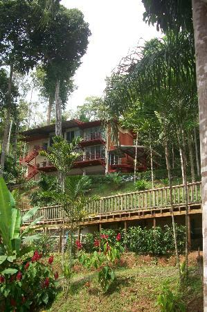Mar y Selva Ecolodge: View to the main building and lobby