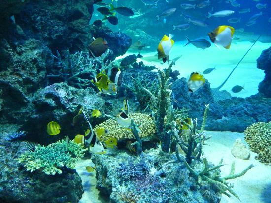 Toshima, Jepang: 熱帯魚が綺麗です