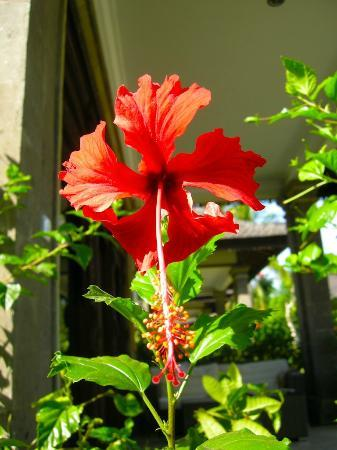 Hotel Ombak Sunset: Red flower