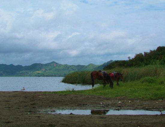 Lunchtime for the Green Ranch Horses by Lake Bosumtwi