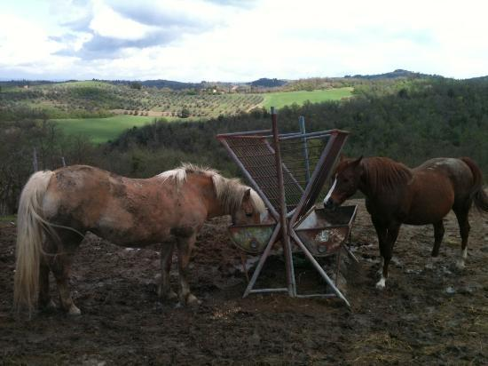 Agriturismo Fattoria Armena: The horses joined us at our wedding ceremony!