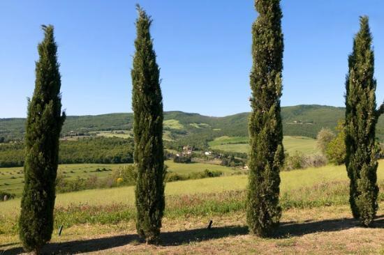 B&B Villa Velia : Panoramic view