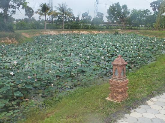 Angkor Palace Resort & Spa: Lotus covered ponds