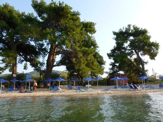 Studios Zafira: The beach area with sunbeds (path between trees.)
