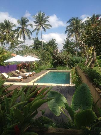 Umajati Retreat: Umajati pool