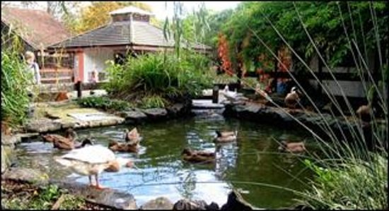 Windmill Hill City Farm: The pond area in the farm yard