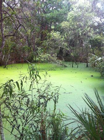 The Lodge on Little St. Simons Island: Alligator Pond