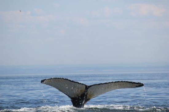 Otis Excursions : Beautiful Dive