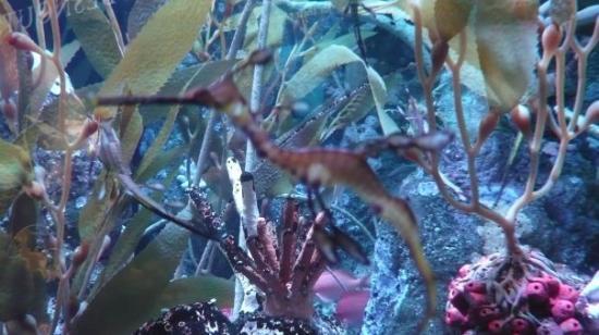 Petit poisson qui se camoufle tr s bien picture of new for Petit aquarium