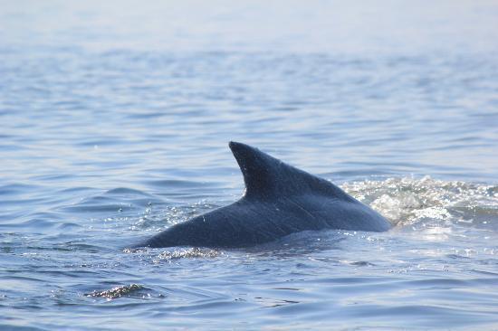Otis Excursions : Whale
