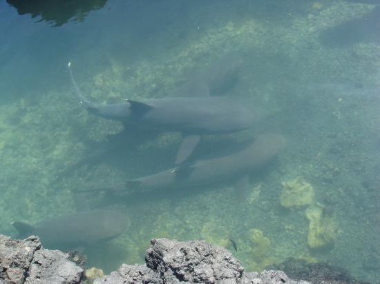Las Tintoreras: sharks
