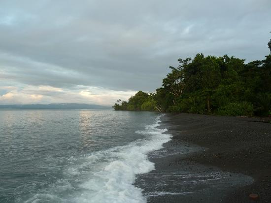 Playa Nicuesa Rainforest Lodge: Beach area where you hear thesoft sound of the lapping waves on shore