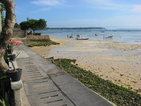 Yogi Beach Bungalows: Vue gauche du jardin YOGI BUNGALOW
