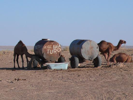Urgench, Uzbekistan: Abreuvoir pour dromadaire
