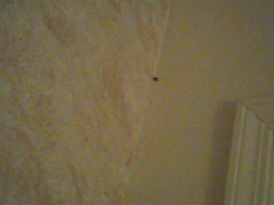 Red Carpet Inn Albany Downtown: one of the black bugs we killed