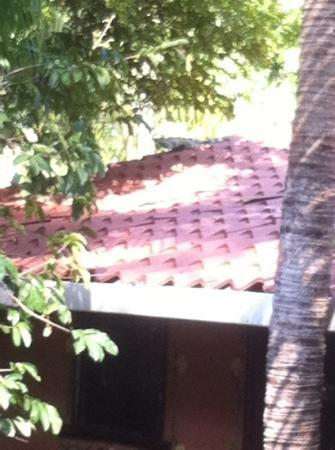 Rancho De La Playa: iguana 