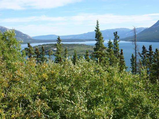 Carcross Desert: Bove Island, Yukon
