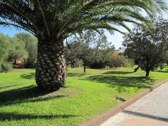 Vialetti e giardini ben curati foto di park hotel porto - Giardini curati ...