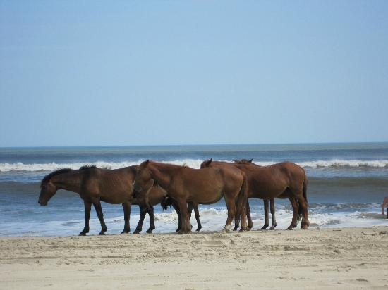 Wild Horse Tours Corolla Nc