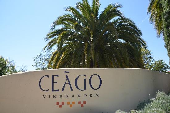 Ceago Estate Wines: Photo-8