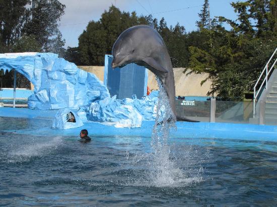 San Clemente del Tuyu, Arjantin: Delfin en Celebración