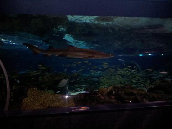 Jellys Picture Of Ripley 39 S Aquarium Of The Smokies