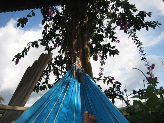 The Guest Suites at Manana Madera Coffee Estate: view from the hammock!!