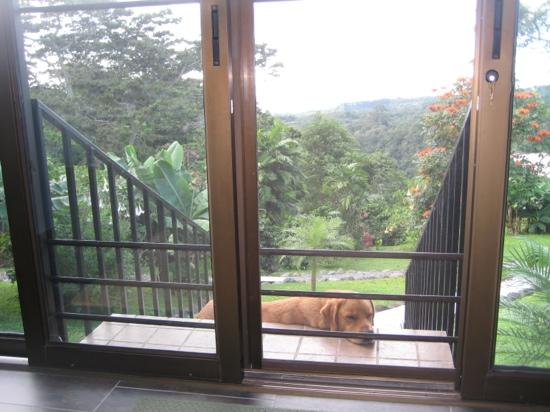 The Guest Suites at Manana Madera Coffee Estate: what a good dog!!! :)
