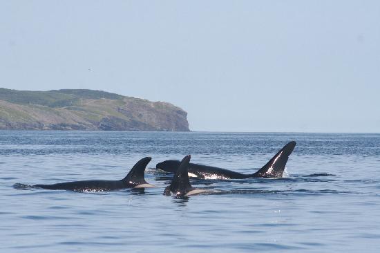 写真Sea of Whales Adventures枚